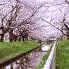 青森県にある穴場の桜スポット9選【地元民だけでなく観光客にもオススメ!!】
