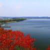 キャンプや湖水浴も楽しめる小川原湖の魅力【シジミ採りもできるよ】