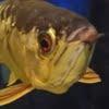 八戸市の水族館「マリエント」は子供にオススメ!【蕪島とセットで!】