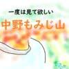 青森にある小嵐山『中野もみじ山』の紅葉について【見頃は?ペットOK?】