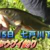 シーズン到来!七戸川でマルタウグイを釣る!【50センチオーバーも?】