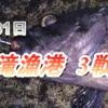 夏泊半島:東滝漁港の夜釣り3戦目【ついに出るか大物!?】